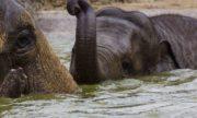 0715 Elefant 1