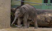 0716 Elefant 2